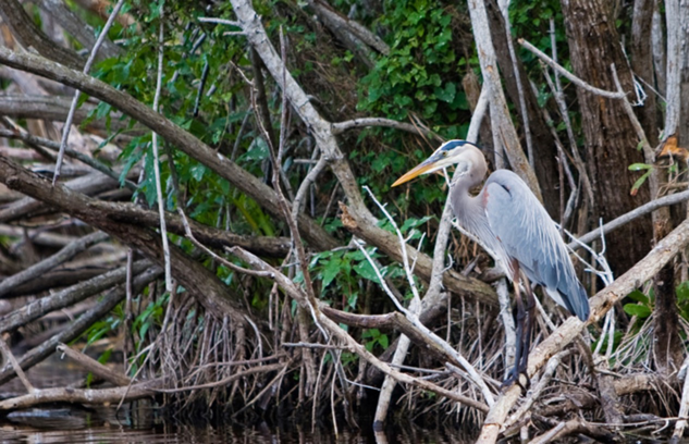 Hobe Sound Natural Wildlife Refuge