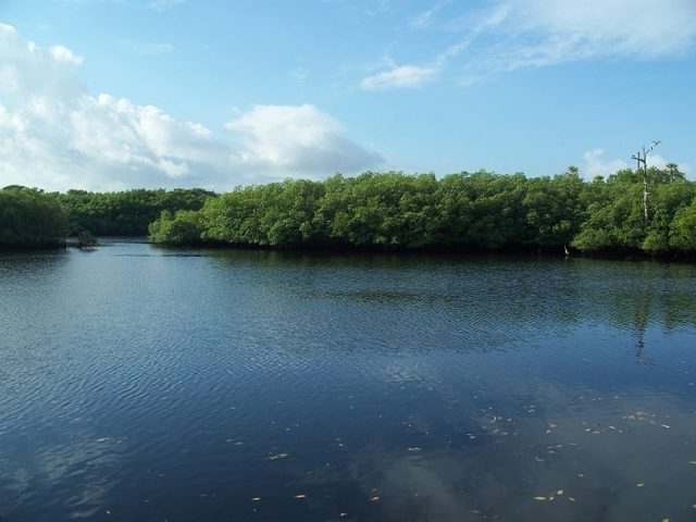 800px-Hobe_Sound_FL_Jonathan_Dickinson_SP_Loxahatchee05