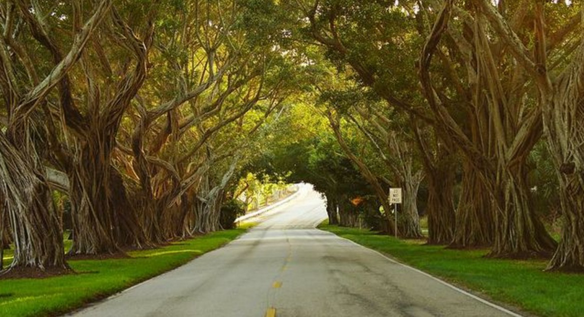 Bridge Road, Hobe Sound, Florida